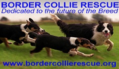Border Collie Rescue Logo