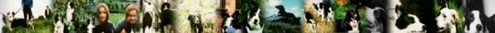 Border Collie Rescue banner